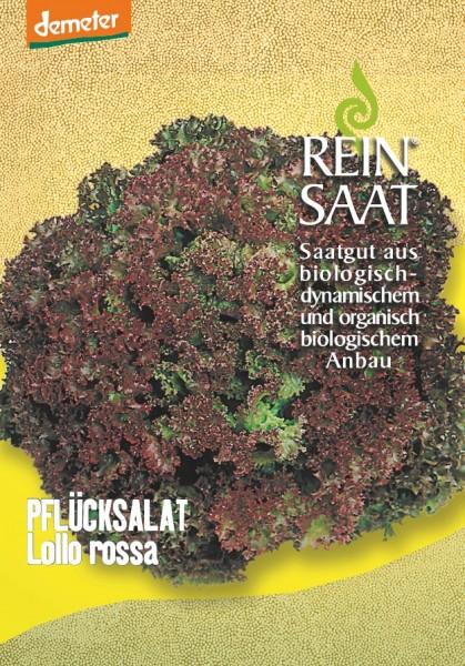 Pflücksalat - Lollo rossa - Bio