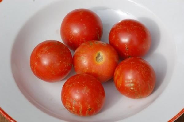 "Tomate ""Tigerella"", gestreifte"