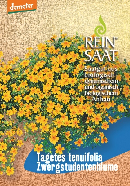Zwergstudentenblume - Tagetes tenuifolia - Bio