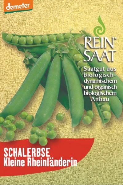 Schalerbse - Kleine Rheinländerin - Bio