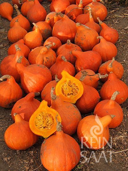Kürbis Hokkaido orange Bio