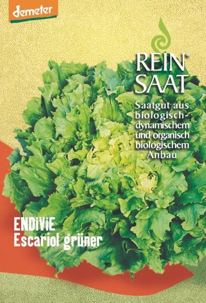 Endiviensalat - Escariol grüner - Bio