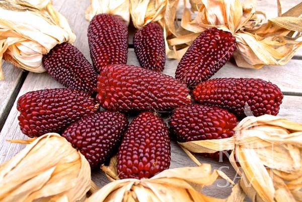 Ziermais - Erdbeermais - Bio