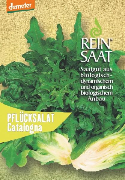Pflücksalat - Catalogna - Bio