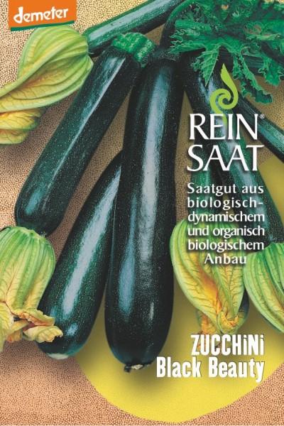 Zucchini - Black Beauty - Bio