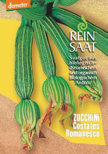 Zucchini - Costates Romanesco - Bio