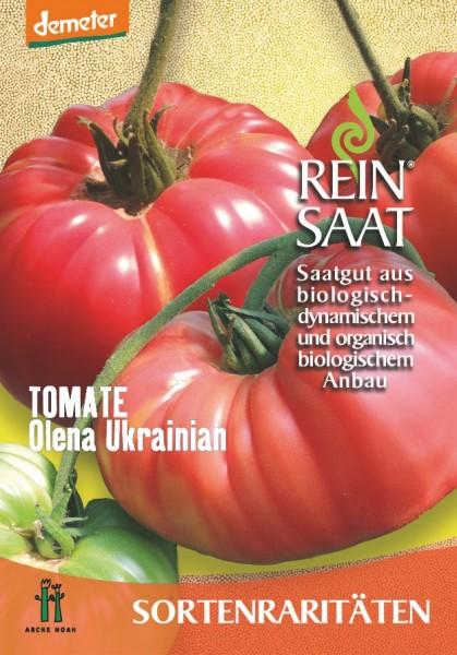 Tomate - Olena Ukrainian - Bio