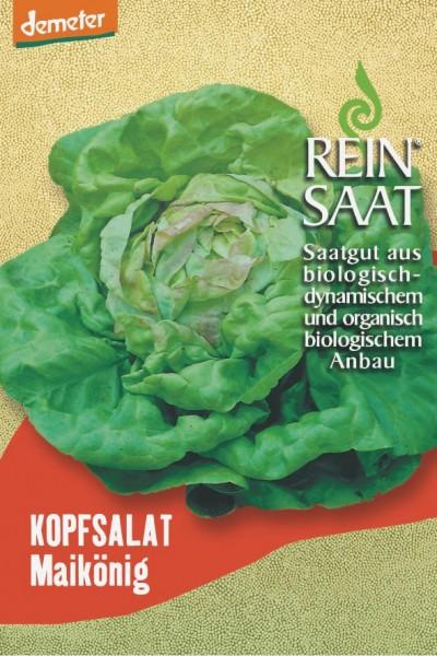 Kopfsalat - Maikönig - Bio