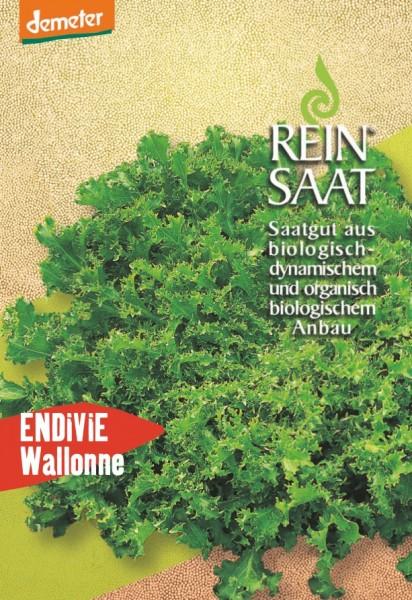 Endiviensalat - Wallonne - Bio