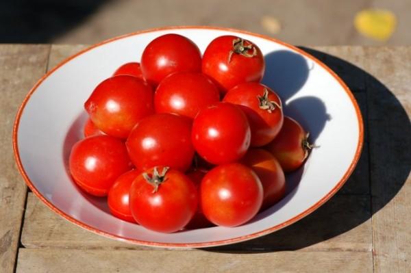 "Tomate ""Bradley"", Buschtomate"