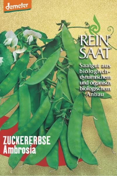 Zuckererbse - Ambrosia - Bio