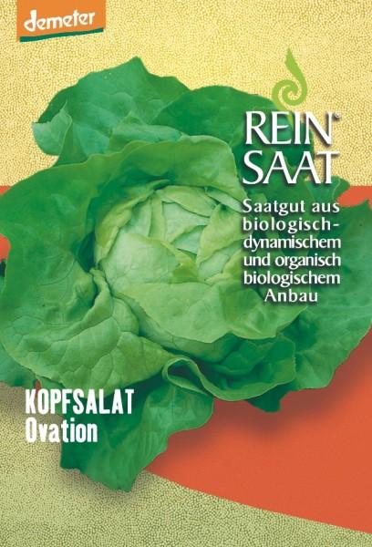 Kopfsalat - Ovation - Bio
