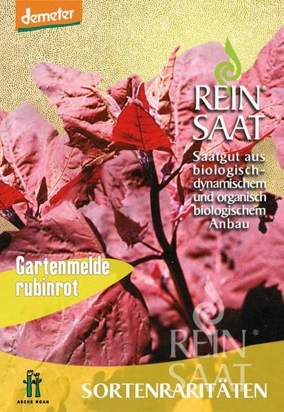 Gartenmelde - Gartenmelde, rubinrot - Bio