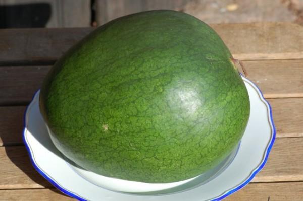 Wassermelone Sweet Siberian