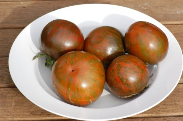 """Tomate """"Black and Red Boar"""", gestreifte"""