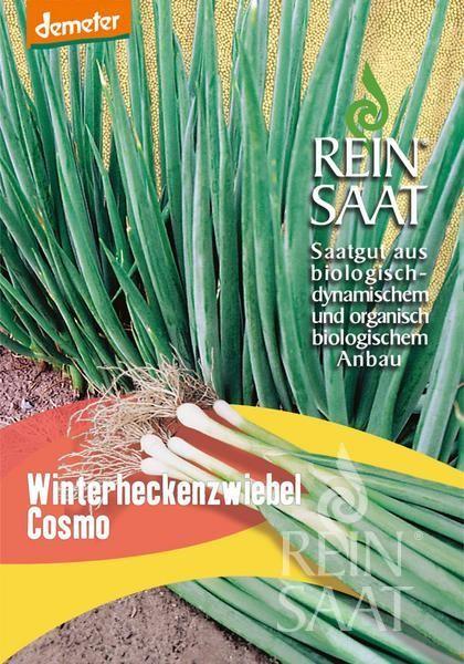 Bundzwiebel - Winterheckenzwiebel Cosmo - Bio